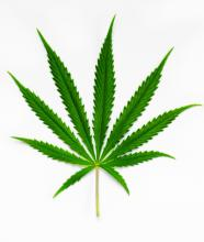 Fulla de cannabis