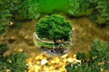 Crisi ecològica