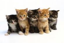Jornades felines europees